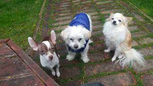 Cute dogs gather together for their dog walker