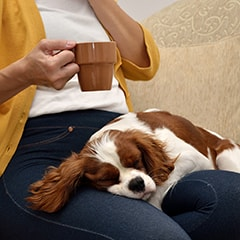 A dog lays on the lap of their pet sitter while she drinks from a mug