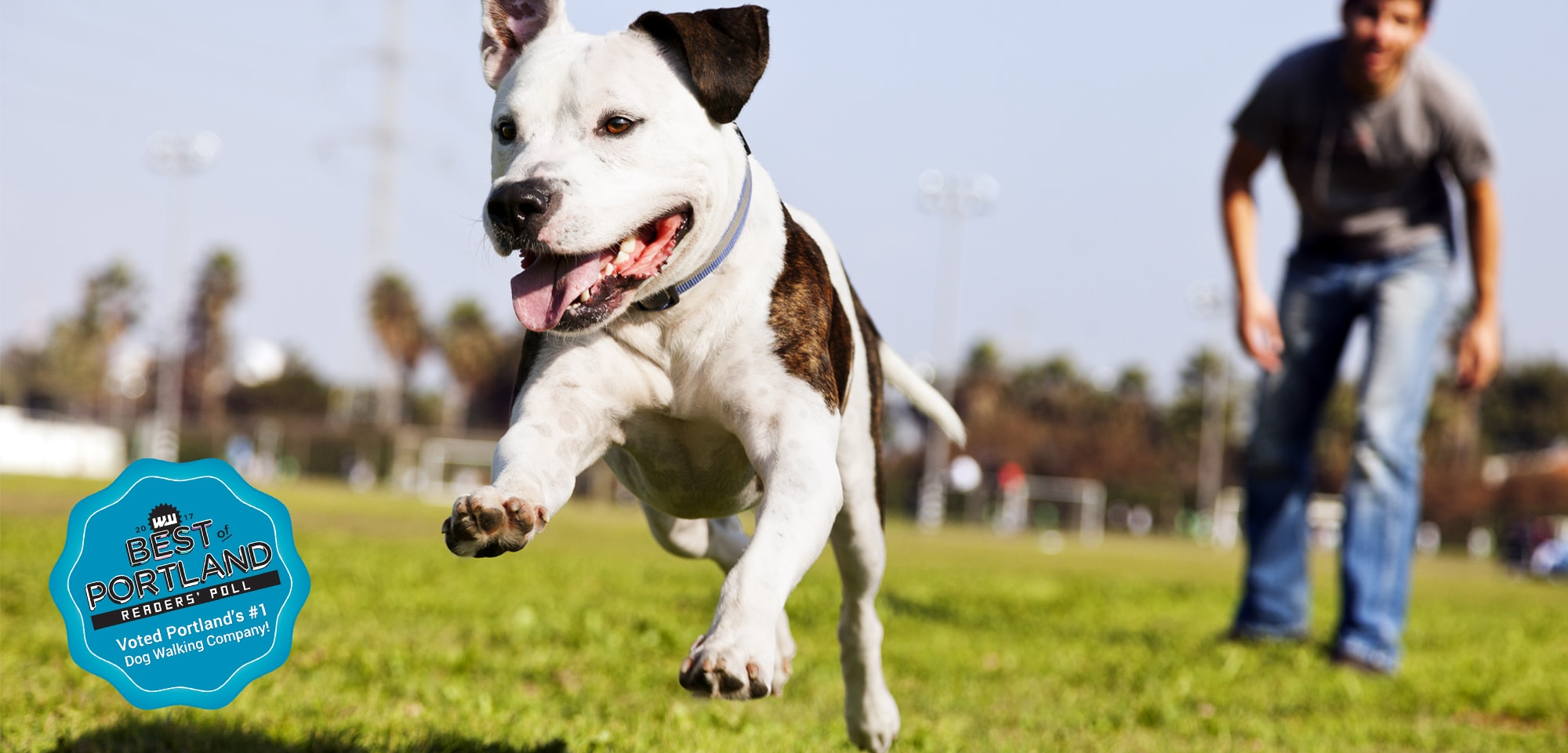 Hot Diggity Dog Walking Pet Sitting Services