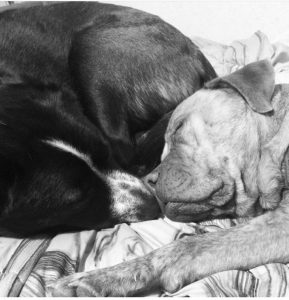 Whitney, a great Portland dog walker and pet sitter, took this cute picture of two of her sweet rescue dogs