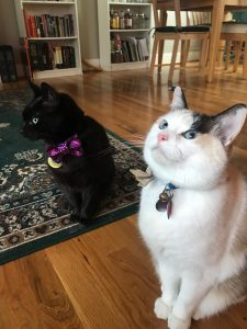 Cute Portland kitties looking dashing for their New Year's Eve Party with their great Portland Cat Sitter