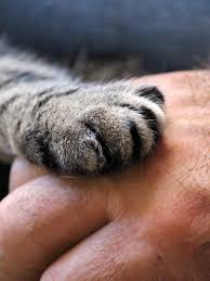 A cat lays it's paw on a human hand, probably their favorite cat sitter from Hot Diggity!