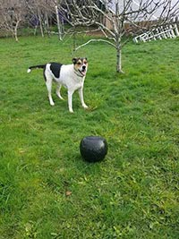 A dog plays ball with their dog walker