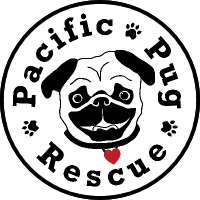 Once you get your new best pug from the Pacific Pug Rescue then don't forget that even little pugs need to keep up their health with regular dog walks in Portland. Where do you find great dog walking? Hot Diggity! has great dog walking services and fantastic dog walkers!
