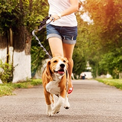 A dog goes running outside with their dog walker instead of staying cooped up in a dog boarding facility!