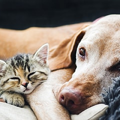 A kitten lays on an older dog. They're happy that Hot Diggity! pet sits for all kinds of pets in Portland, Oregon!