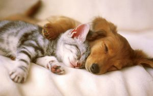 A kitten and a puppy snuggle together, definitely in love with their Hot Diggity! pet sitter