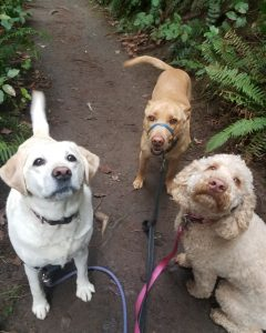 Three dogs look up happily at their Hot Diggity! Portland pack leader